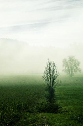 Stille im Nebel - fotokunst von Martina Fischer
