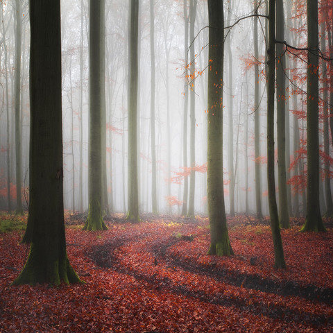Tracks - fotokunst von Carsten Meyerdierks