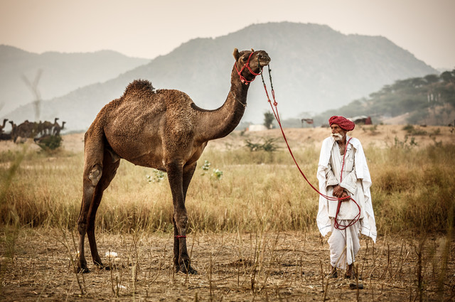 At the Camel Fair - fotokunst von Jens Benninghofen