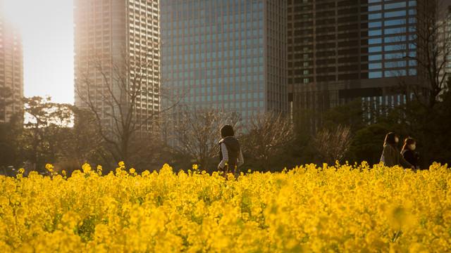 sunny afternoon in Tokyo - fotokunst von Manuel Kürschner
