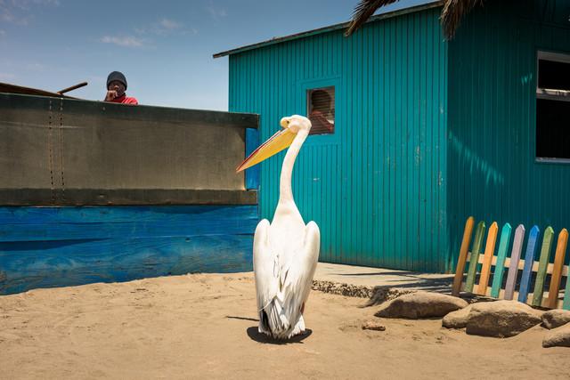 Pelikan am Pier - fotokunst von Michael Stein