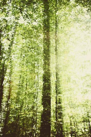 Wald im Herbst - fotokunst von Nadja Jacke