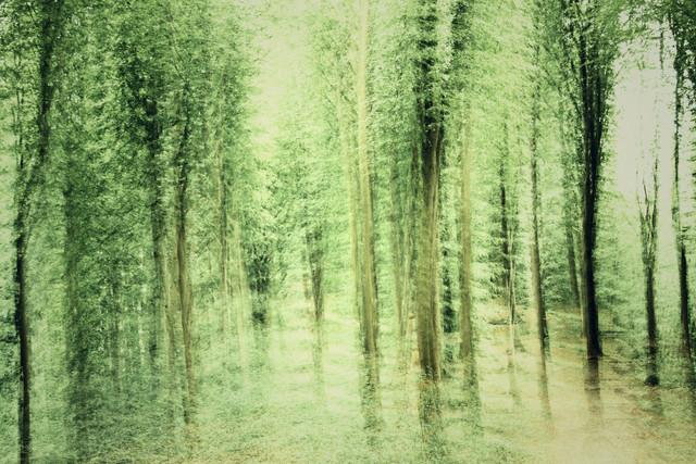 Verwischter Wald - fotokunst von Nadja Jacke