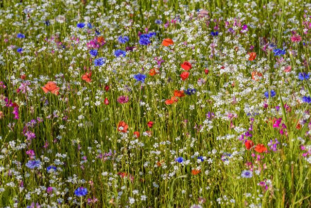Blütenzauber - fotokunst von Ralf Germer