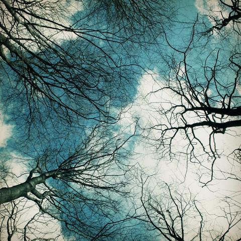 blick nach oben - fotokunst von Manuela Deigert