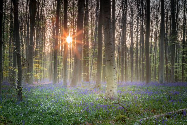 Frühlingszeit - fotokunst von Markus Van Hauten