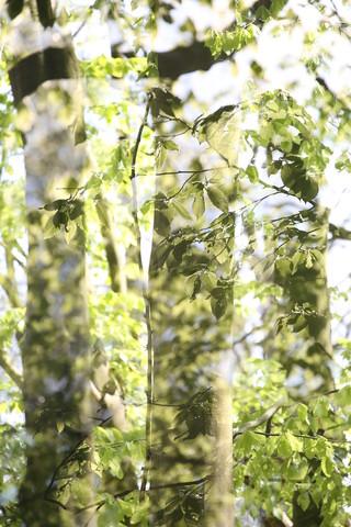 Wald - fotokunst von Rolf Bökemeier