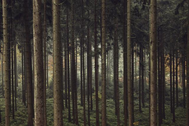 Geborgenheit im Teutoburger Wald - fotokunst von Nadja Jacke