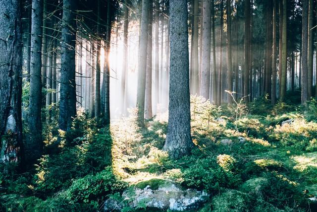 Waldspaziergang - fotokunst von Andi Weiland