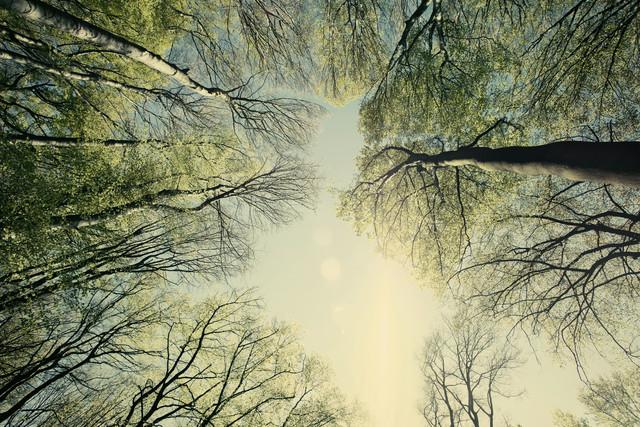 Frühlingshimmel im Teutoburger Wald - fotokunst von Nadja Jacke