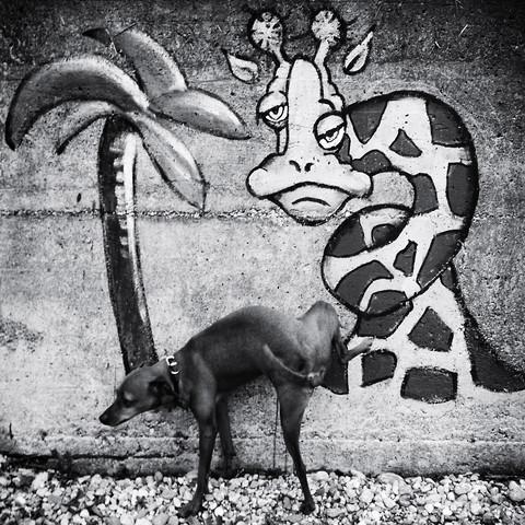 Hund ... - fotokunst von Christine Frick