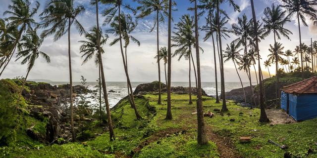 Palm-Scape - fotokunst von Markus Schieder
