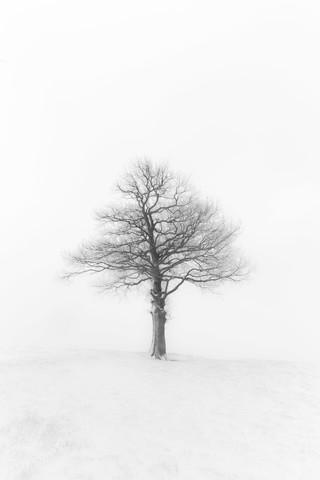 The Tree - fotokunst von Markus Van Hauten