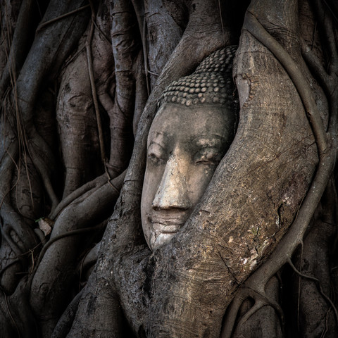 Buddha in Ayutthaya 1:1 - fotokunst von Sebastian Rost