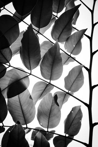 Zweige und Blätter - fotokunst von Tal Paz Fridman