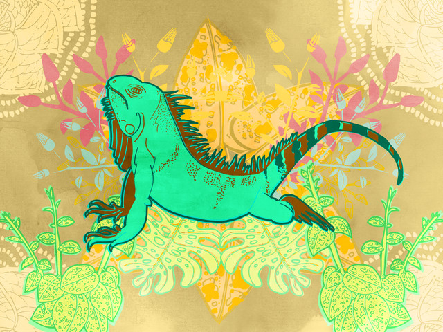 Wild Iguana - fotokunst von Catalina Villegas