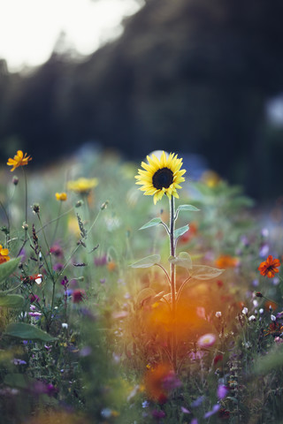 Sommerblumen am Straßenrand - fotokunst von Nadja Jacke