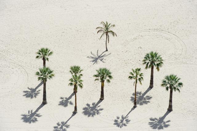 Palmen - fotokunst von Daniel Schoenen