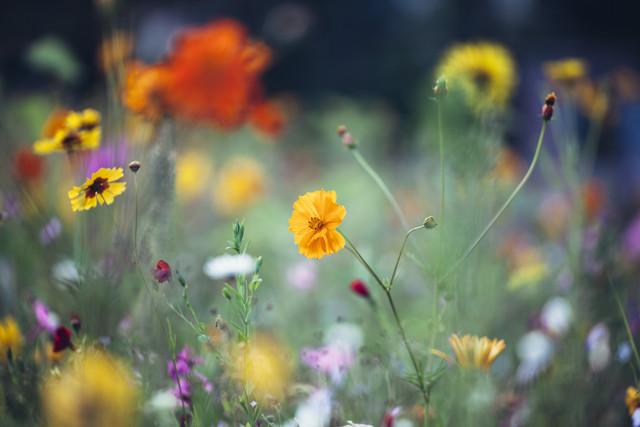 farbenfrohes Sommerblumenbeet - fotokunst von Nadja Jacke