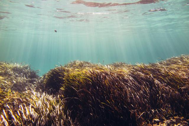 Unterwasser Graslandschaft bei Formentera - fotokunst von Nadja Jacke