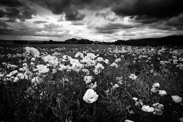 Mohnblumenfeld - fotokunst von Oliver Henze