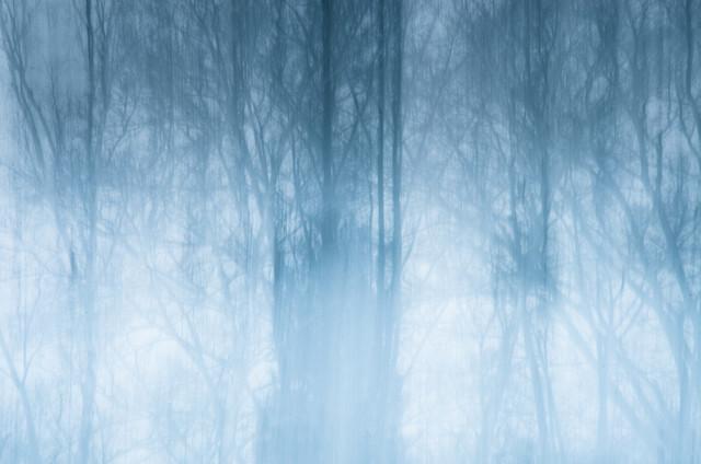 Nebelwald - fotokunst von Gregor Ingenhoven