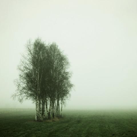 early foggy morning - fotokunst von Manuela Deigert