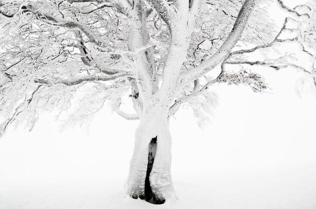 Winterbaum - fotokunst von Daniel Schoenen