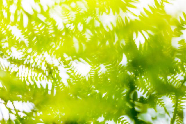 Eines warmen Sommertages im Wald - fotokunst von Un-typisch Verena Selbach