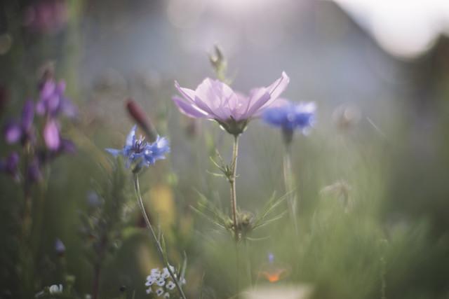 Sommerblumen im Sommer Sonnenlicht - fotokunst von Nadja Jacke