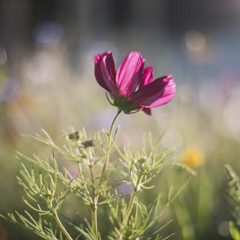 Schmuckkörbchen leuchtend in der Sommersonne - fotokunst von Nadja Jacke