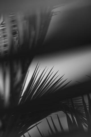 Palmenwedel einer Palme im Sonnenlicht in schwarzweiß - fotokunst von Nadja Jacke