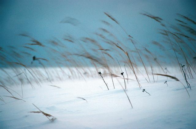 Lettische Winter - fotokunst von Carsten Wilde