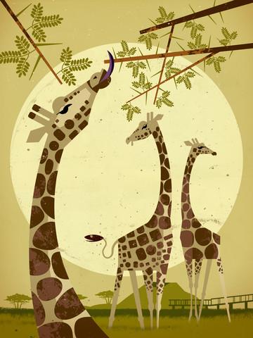 Giraffen - fotokunst von Dieter Braun
