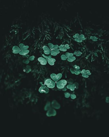 Dark Green - fotokunst von Luca Jaenichen