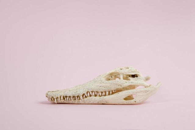 Pop Skull - fotokunst von Loulou von Glup
