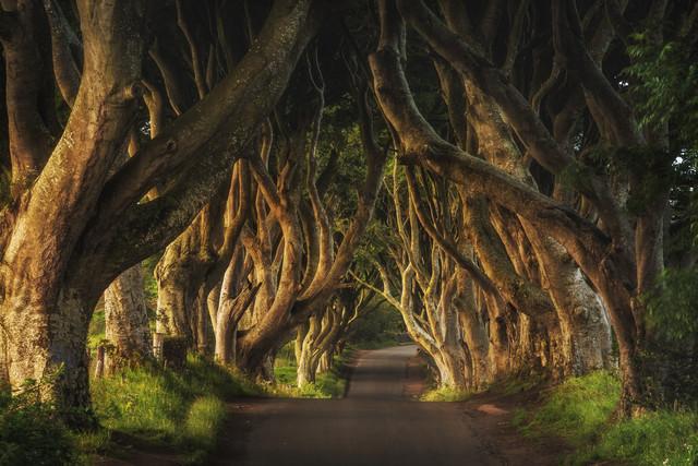 Irland - The Dark Hedges Sunrise - fotokunst von Jean Claude Castor