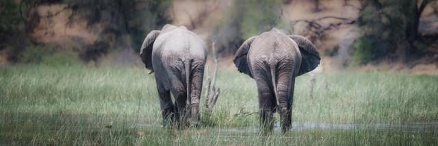 Elefanten im Makgadikgadi Pans National Park  - fotokunst von Dennis Wehrmann