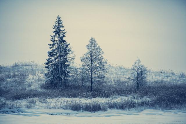 Stilleben von Bäumen im Schnee - fotokunst von Franz Sussbauer