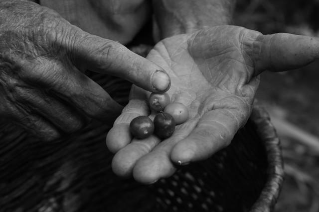 Kaffeebauer in Kolumbien - fotokunst von Andreas Katzenberger
