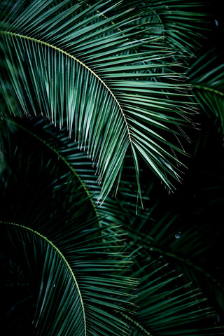 Palm Leaves 9 - fotokunst von Mareike Böhmer