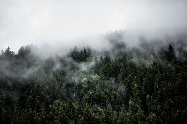 Foggy Woods 5 - fotokunst von Mareike Böhmer