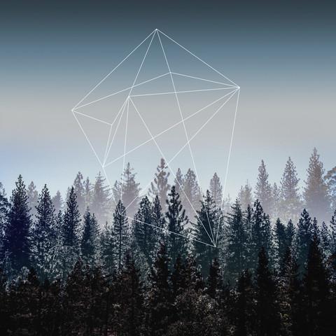 Woods - fotokunst von Mareike Böhmer