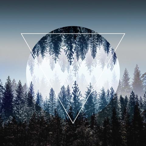 Woods 4 - fotokunst von Mareike Böhmer