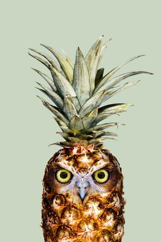 Ananas Eule - fotokunst von Jonas Loose