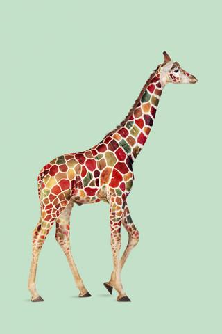 Bunte Giraffe - fotokunst von Jonas Loose