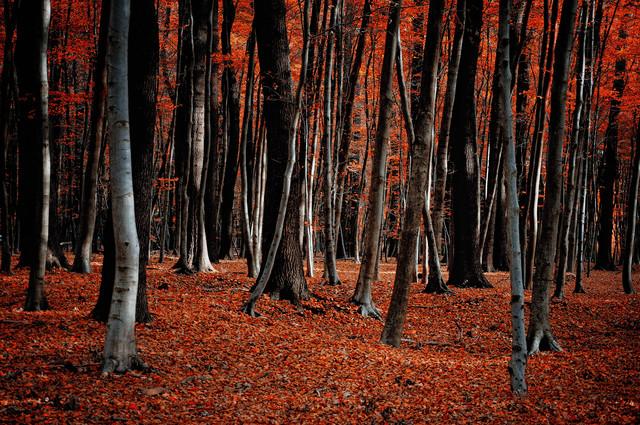 Feuerwald im Herbst - fotokunst von Stefan Wensing