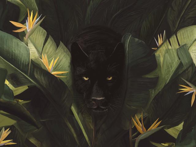 Hello Panther ! - fotokunst von Florent Bodart