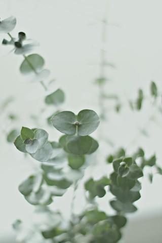 EUCALYPTUS GREEN - fotokunst von Monika Strigel