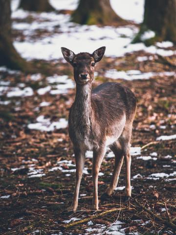 Bambi In the Woods - fotokunst von Gergo Kazsimer
